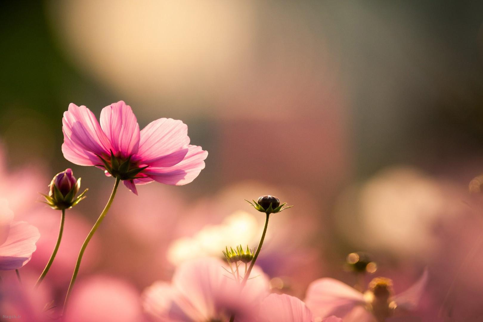 عکس فصل بهار با کیفیت بالا