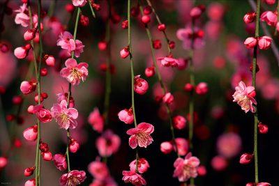 گالری تصاویر تقویم فصل بهار